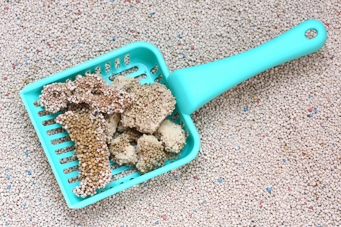 cat litter with cat sand