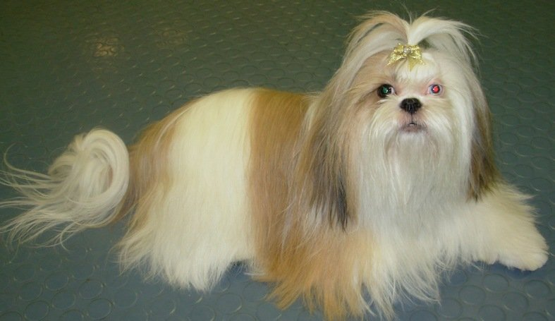 Top 13 Long Haired Dog Breeds Will Make You Envy Them Pet Comments
