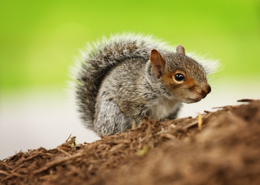 What Do Baby Squirrels Eat Pet Comments