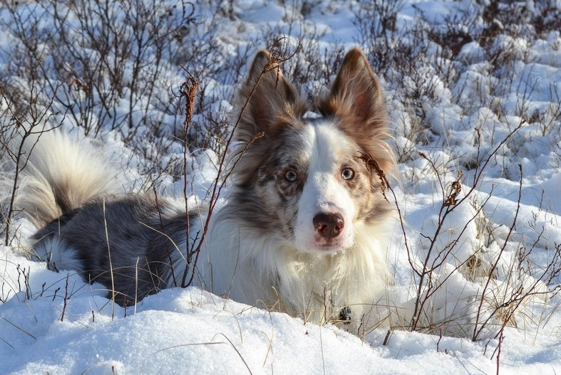 Can Dogs Have Different Colored Eyes