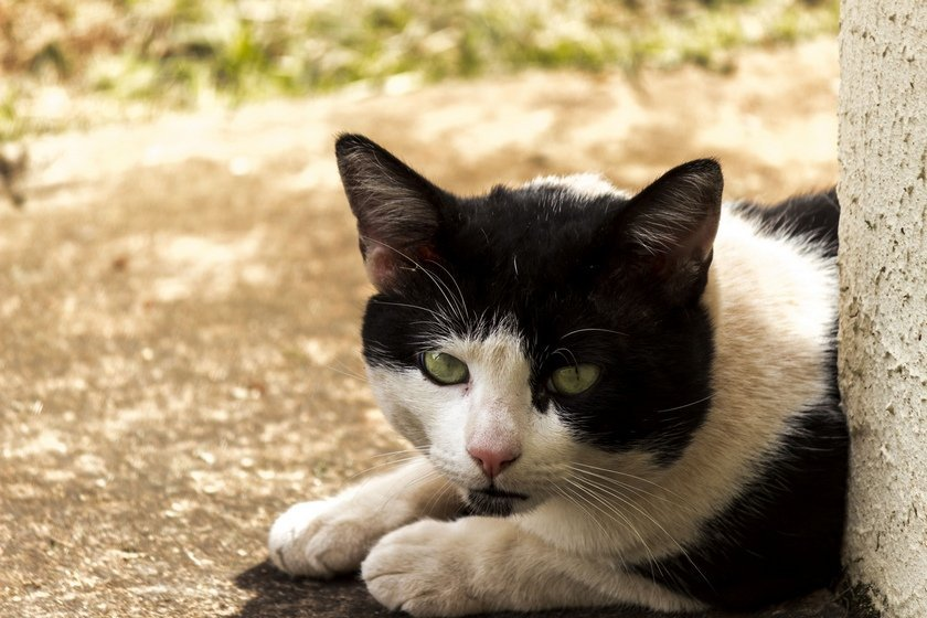 How Can Cats Get Roundworms