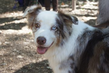 Dog With Colored eyes