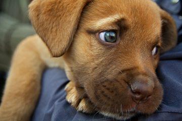 dog fire ant bites treatment