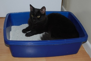 Best Clumping Cat Litters