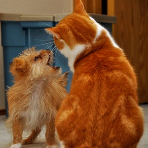 Dog vs Cat  Which Pet Is Better For Kids